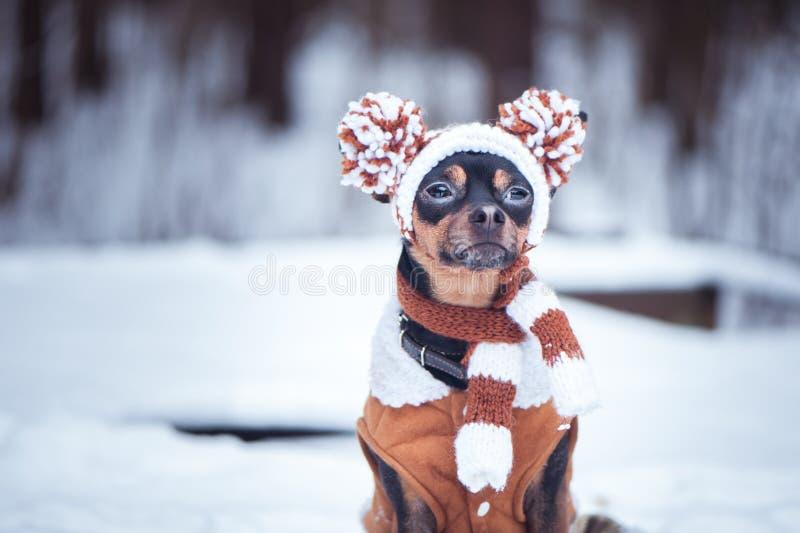 Leuk puppy, hond, stuk speelgoed terriër in sjaal, portret macro, nieuw jaar, stock afbeelding