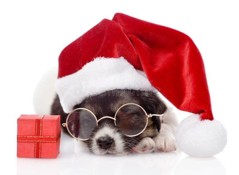 Leuk puppy met rode giftdoos en santahoed Geïsoleerde stock fotografie