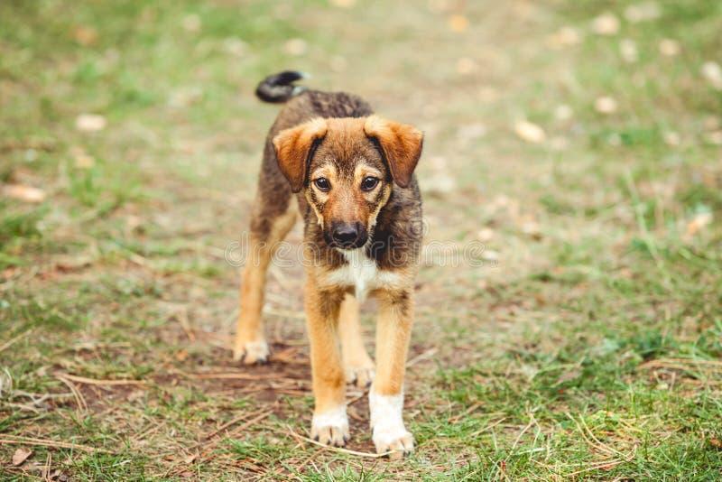Leuk puppy op gazon Het golven van zijn staart en het bekijken camera royalty-vrije stock foto
