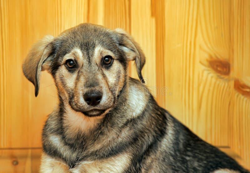 Leuk puppy pooch royalty-vrije stock afbeelding