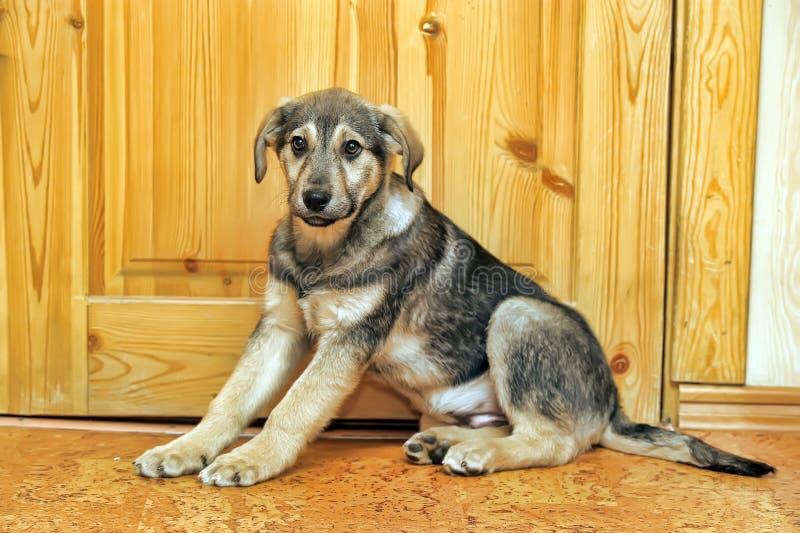 Leuk puppy pooch royalty-vrije stock foto