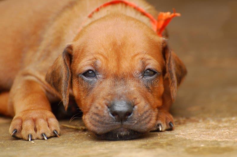 Leuk puppygezicht stock foto's