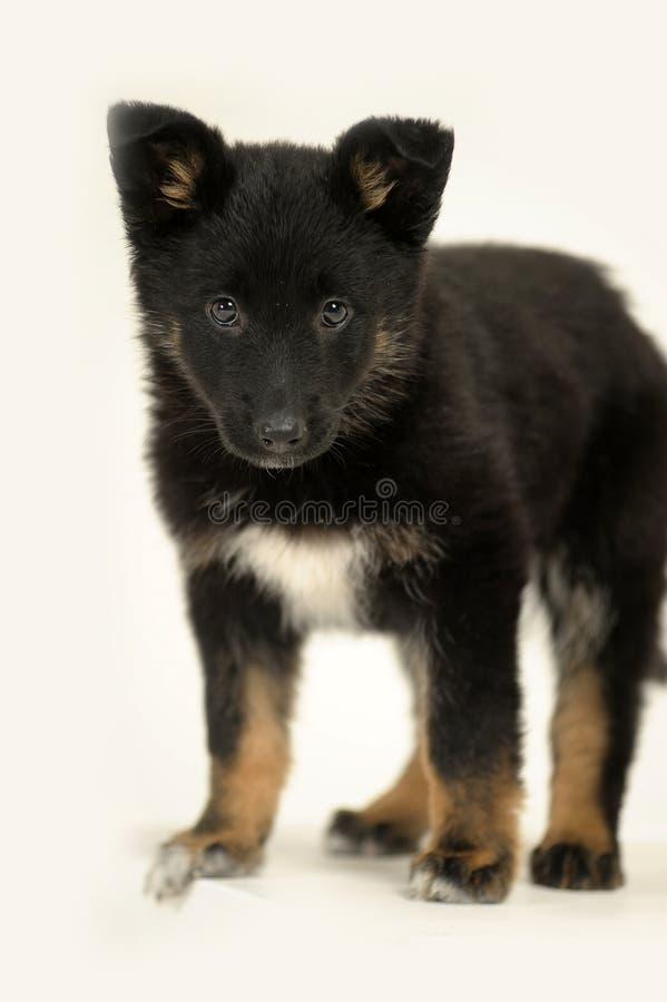 Leuk rasecht puppy royalty-vrije stock fotografie