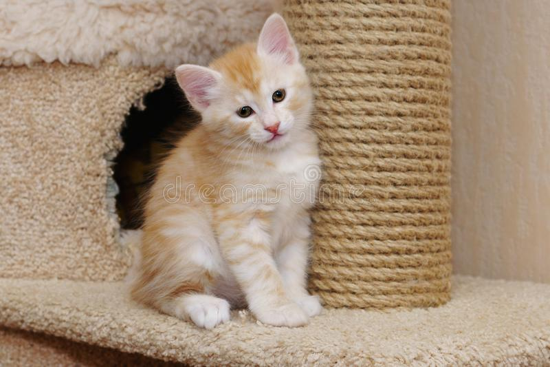 Leuk rood katje stock foto