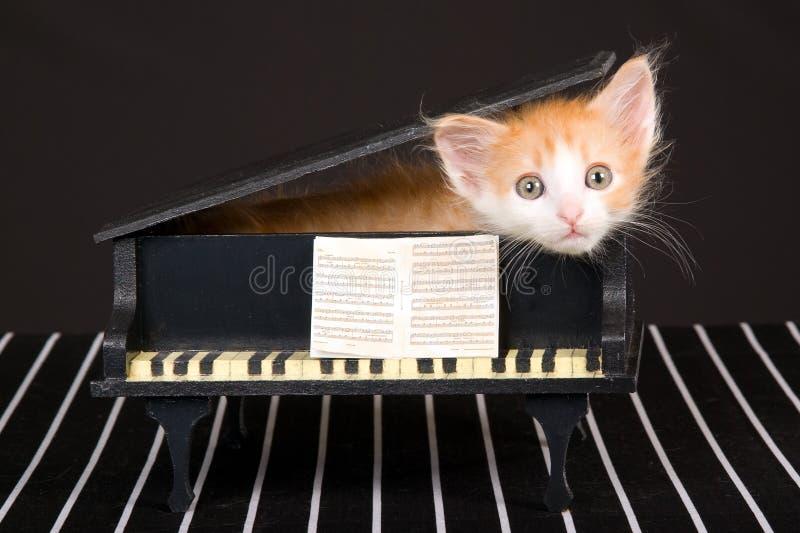 Leuk rood katje in mini grote piano royalty-vrije stock foto's