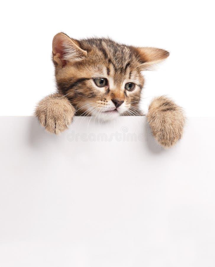 Leuk Siberisch katje royalty-vrije stock fotografie