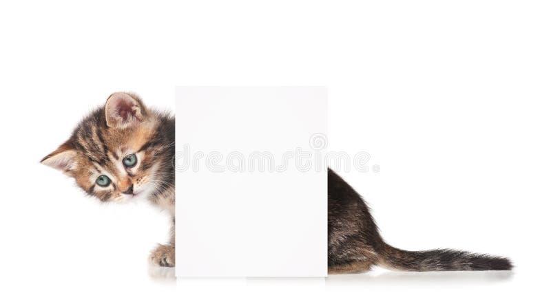 Leuk Siberisch katje stock foto
