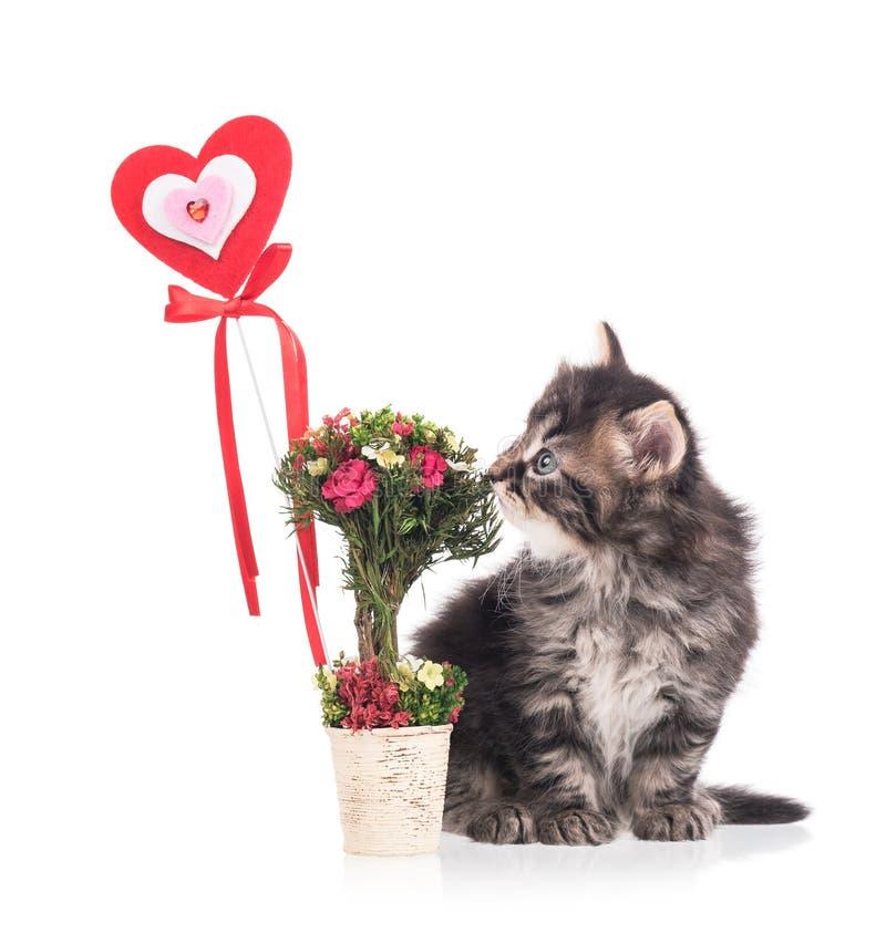 Leuk Siberisch katje royalty-vrije stock afbeeldingen