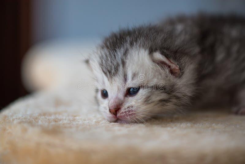Leuk slaperig katje stock foto