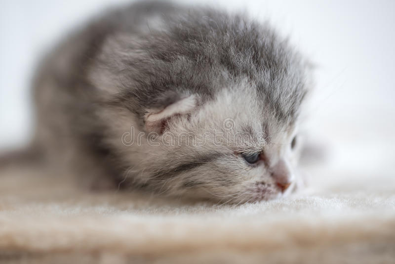 Leuk slaperig katje stock afbeelding