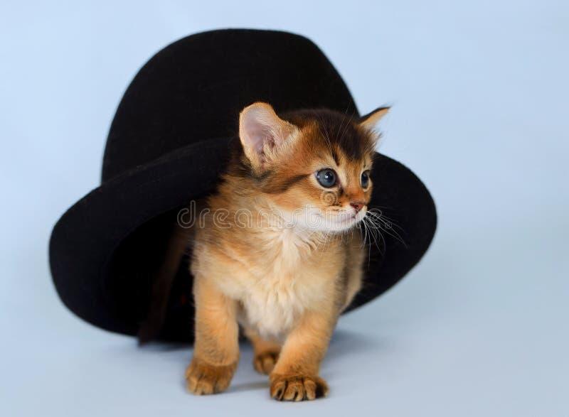 Leuk Somalisch katje in een hoed stock fotografie