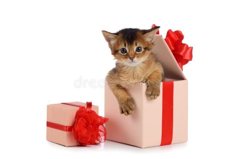 Leuk Somalisch katje in een huidige doos royalty-vrije stock afbeelding