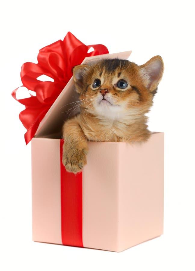 Leuk Somalisch katje in een huidige doos royalty-vrije stock foto's