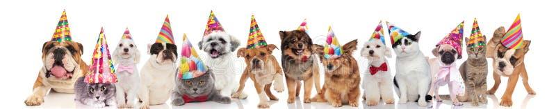 Leuk team van huisdieren met kleurrijke hoeden klaar voor partij stock foto's