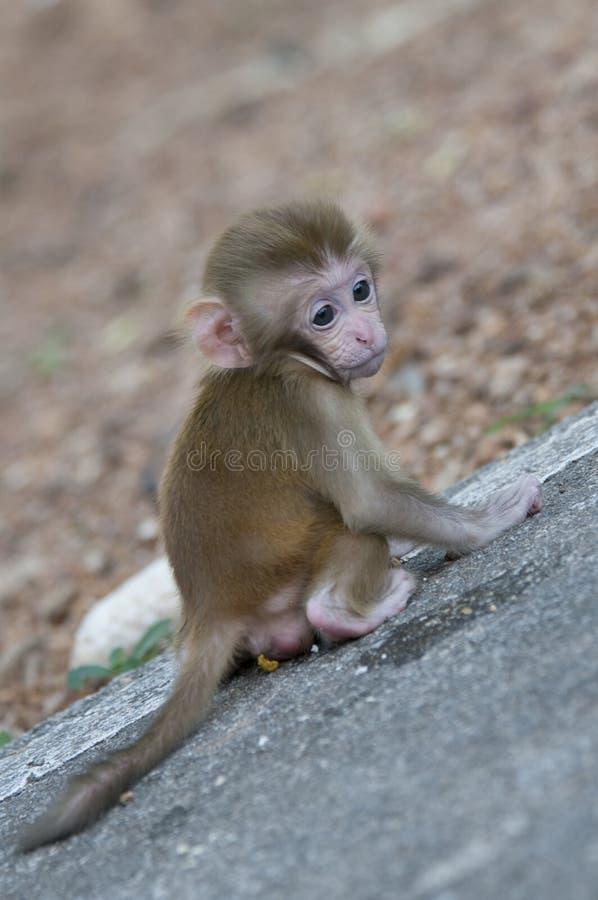 Leuk weinig aap stock afbeelding