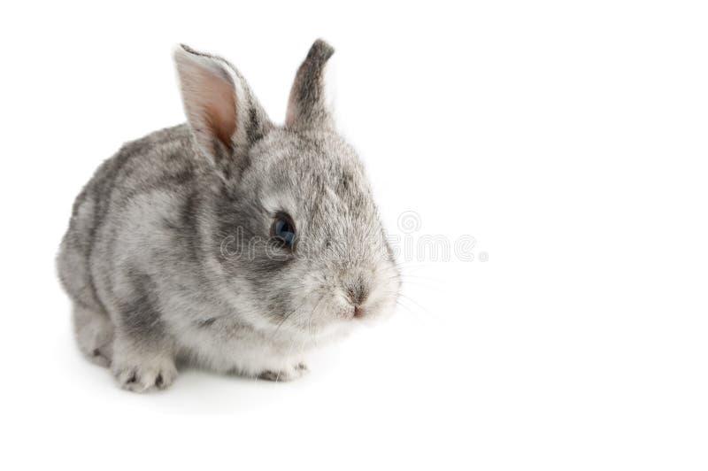 Leuk weinig babykonijn op witte geïsoleerde achtergrond, stock fotografie