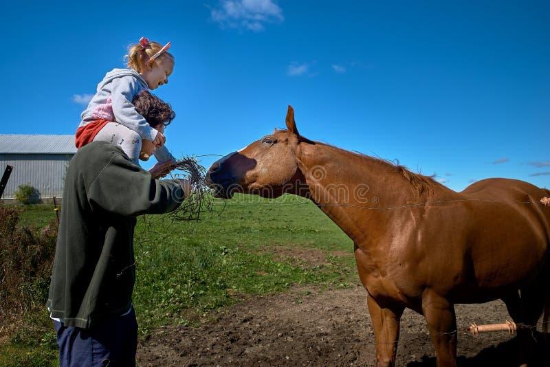 Leuk weinig babymeisje die een groot paard op een boerderij in de herfst voeden stock foto's