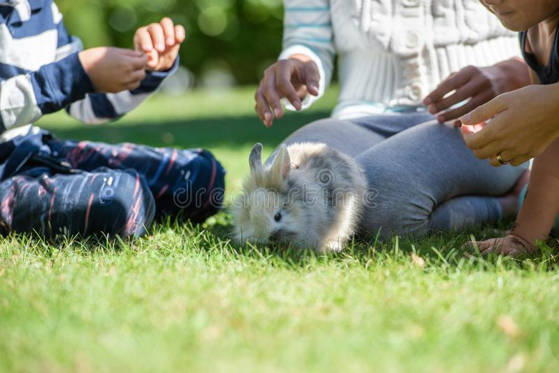 Leuk weinig bontkonijn in een gras stock foto