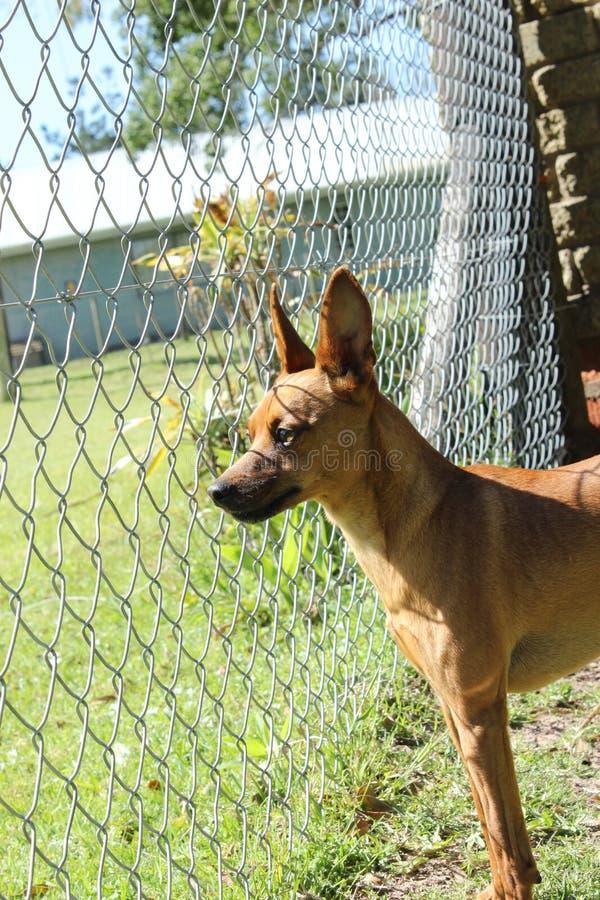 Leuk weinig bruine hond in zijn werf royalty-vrije stock fotografie