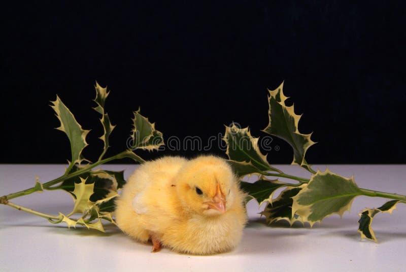 Leuk weinig die kip op gele achtergrond wordt ge?soleerd stock afbeelding