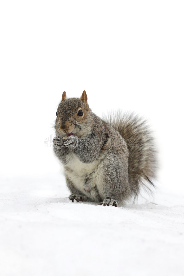 Leuk weinig eekhoorn royalty-vrije stock foto
