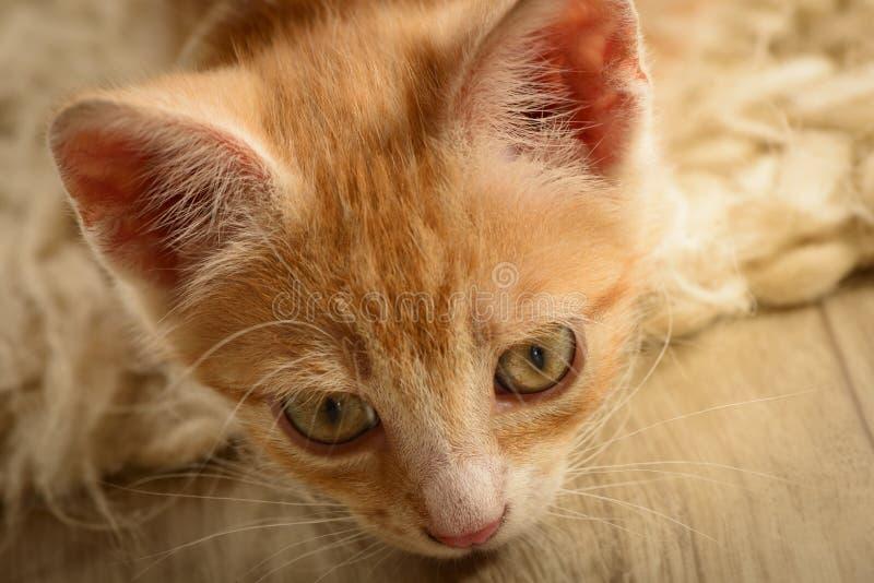 Leuk weinig gestreepte kat op een tapijt royalty-vrije stock afbeelding