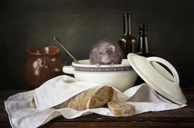 Leuk weinig grijze die rat in de terrine door brood en flessen wordt omringd Stilleven in uitstekende stijl met een levende rat C royalty-vrije stock afbeelding