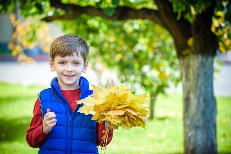 Leuk weinig jongen die in de herfst op aardgang spelen De bos van de jongensholding van esdoornbladeren in park De herfst, kinder royalty-vrije stock afbeeldingen