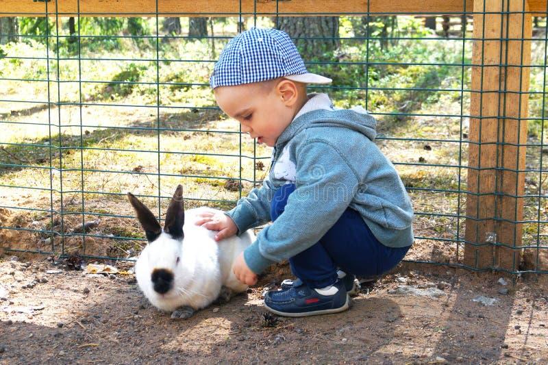 Leuk weinig jongen die een wit konijn in openlucht strijken stock foto's