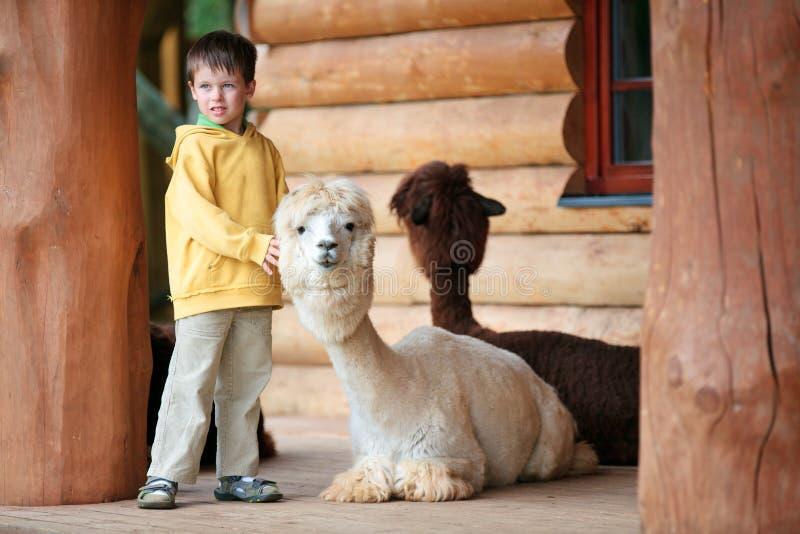 Leuk weinig jongen die met een babyalpaca speelt royalty-vrije stock foto's