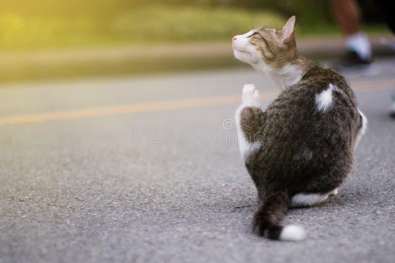 Leuk weinig kat stock foto