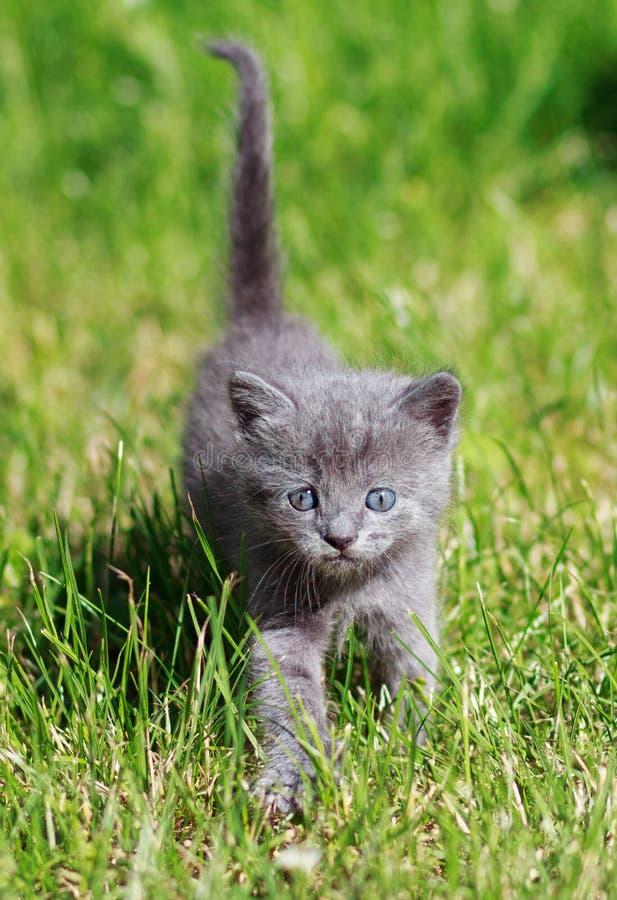 Leuk weinig kat het spelen op het gras stock foto