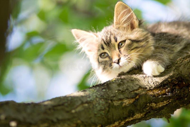Leuk weinig katje die op een boomtak liggen stock afbeeldingen