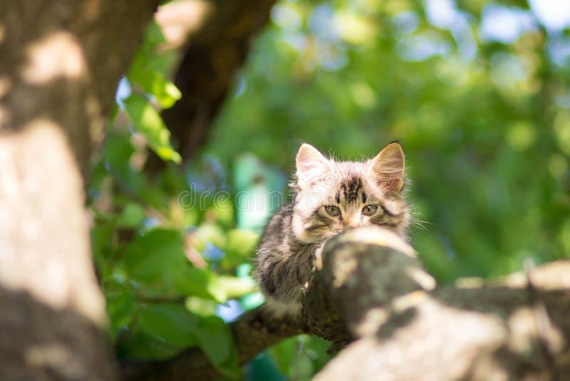 Leuk weinig katje die op een boomtak liggen royalty-vrije stock afbeeldingen