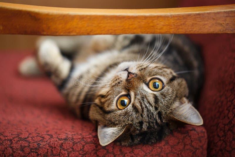 Leuk weinig katje Het pluizige die huisdier comfortabel aan slaap of aan spel wordt geregeld stock foto