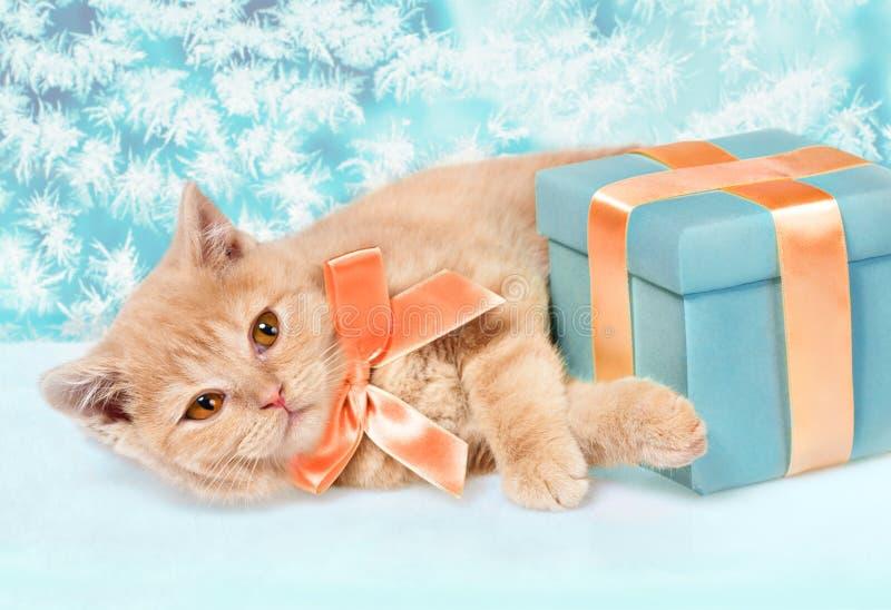Leuk weinig katje met huidige doos royalty-vrije stock afbeelding