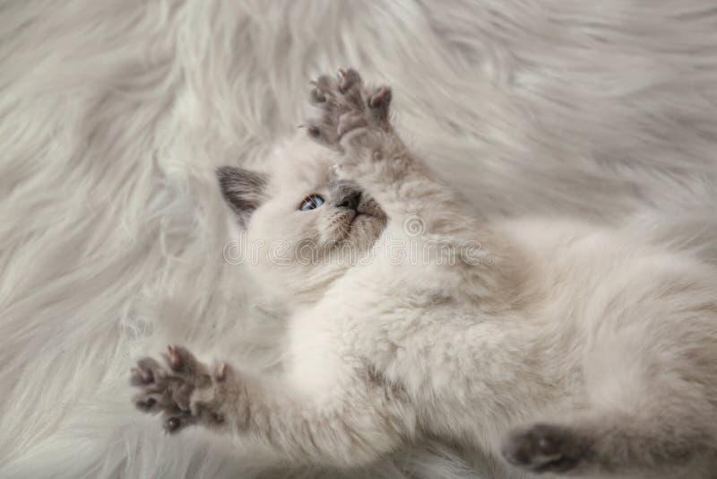 Leuk weinig katje op pluizige plaid thuis royalty-vrije stock foto