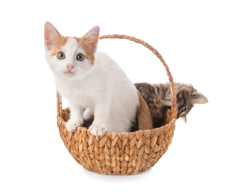 Leuk weinig katje in rieten mand op witte achtergrond stock foto