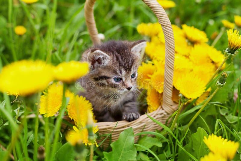 Leuk weinig katjeszitting in een mand op de mooie bloemweide royalty-vrije stock fotografie