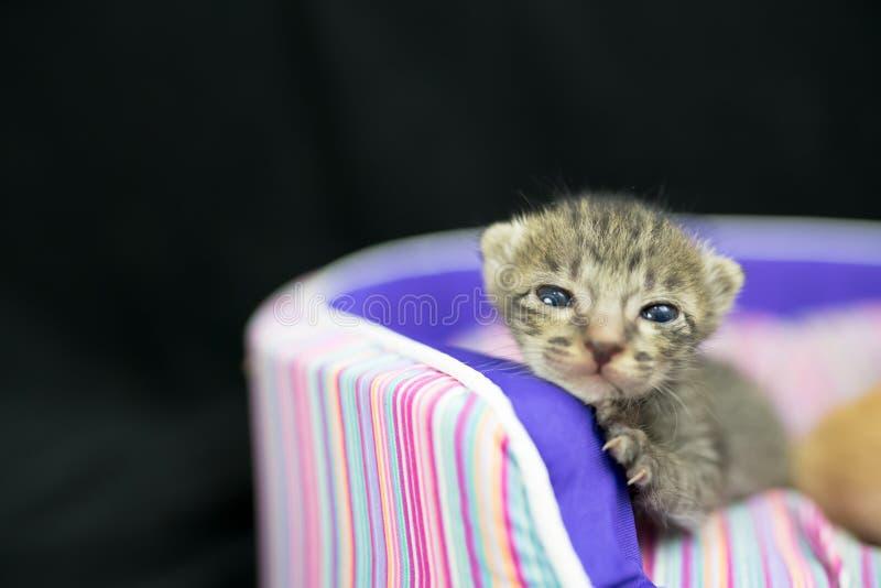 Leuk weinig kattenslaap stock fotografie