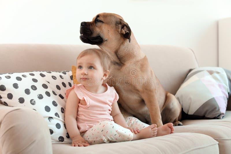 Leuk weinig kind met hond op laag stock afbeeldingen