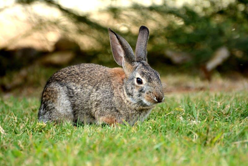 Leuk weinig konijn in Gilbert royalty-vrije stock afbeeldingen