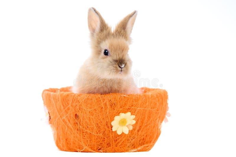 Leuk weinig konijntjeszitting in een Pasen-mand op een wit royalty-vrije stock afbeeldingen