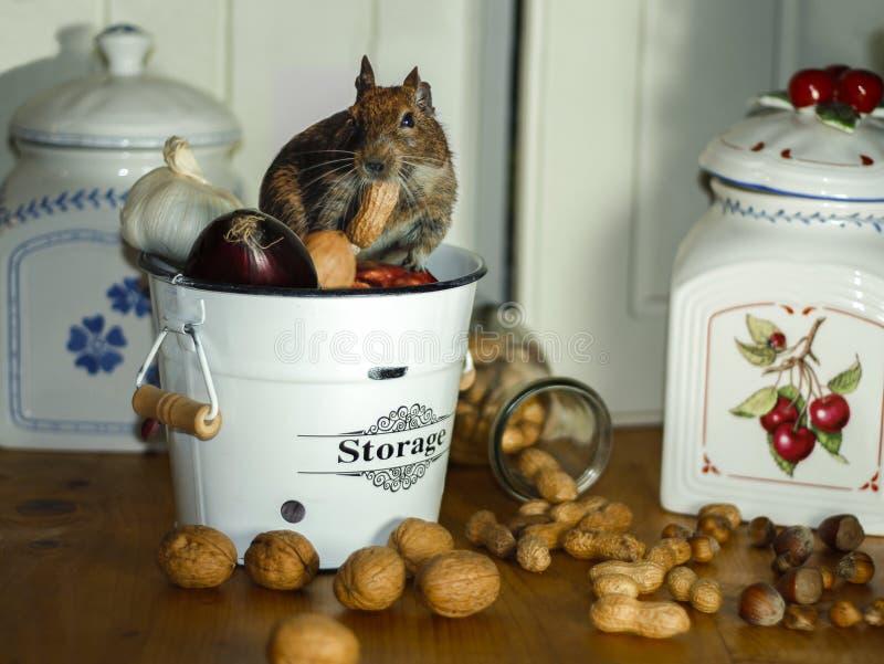 Leuk weinig muis in een opslagpot van voedsel met noten en ui stock fotografie