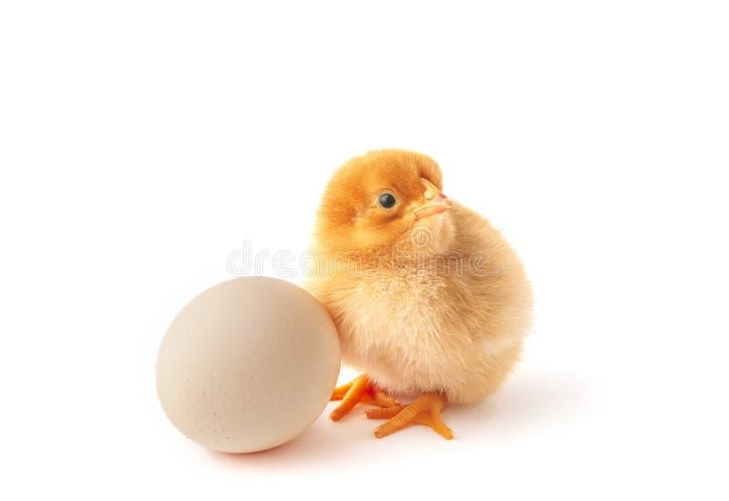 Leuk weinig pasgeboren kip en ei royalty-vrije stock afbeelding