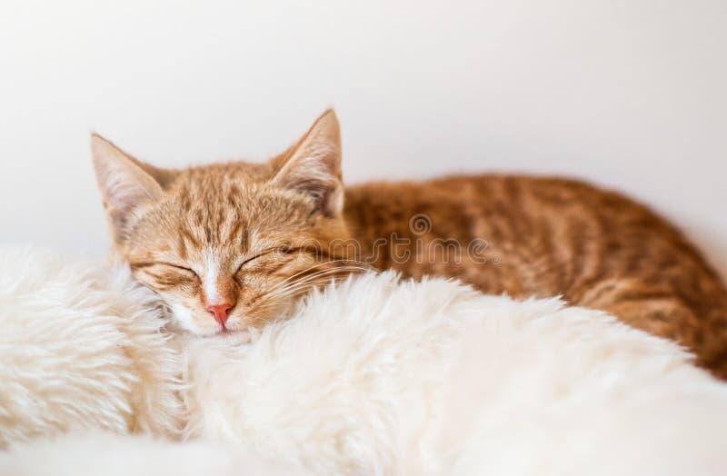 Leuk weinig slaap van het gemberkatje in zachte witte deken stock foto