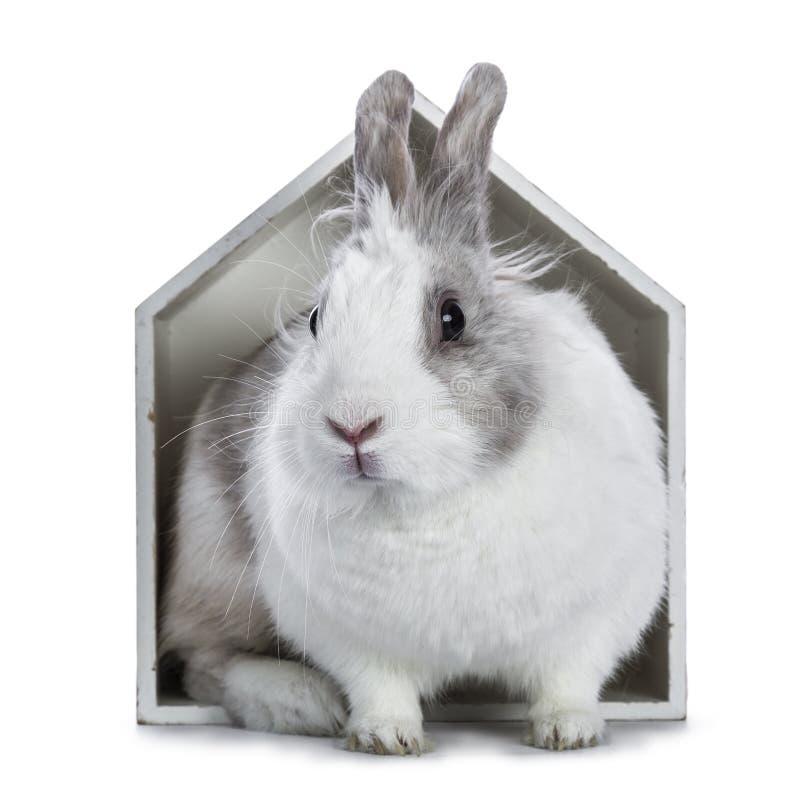Leuk wit met grijs konijn stock afbeeldingen