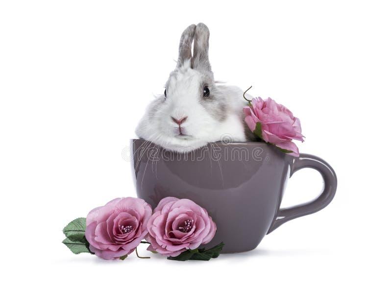 Leuk wit met grijs konijn royalty-vrije stock afbeelding
