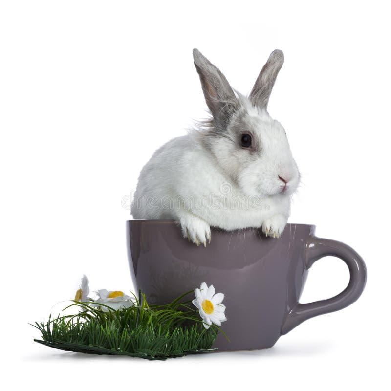 Leuk wit met grijs konijn royalty-vrije stock foto