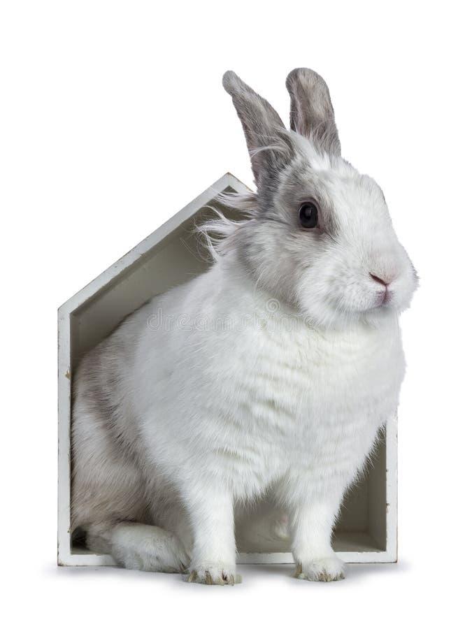 Leuk wit met grijs konijn stock foto's